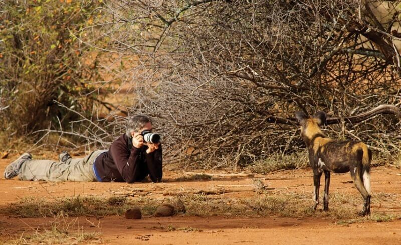 Taking photo of hyena
