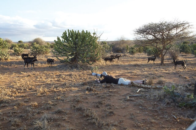 Lying low in Laikipia