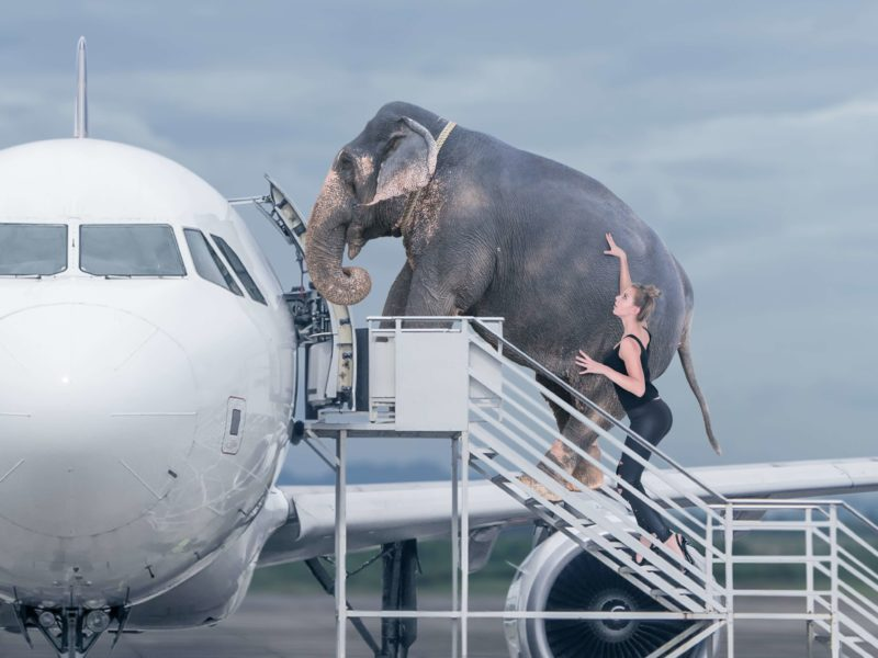 emigrating with exotic pets