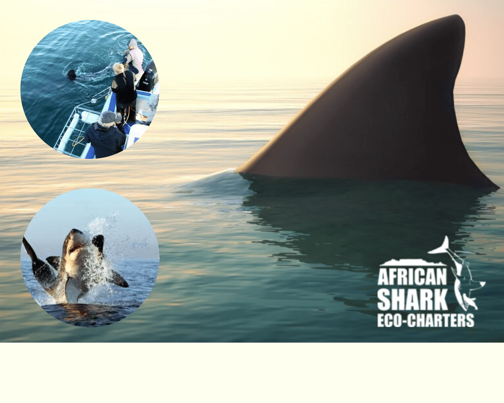 AFRICAN SHARK ECO CHARTERS COMPETITION